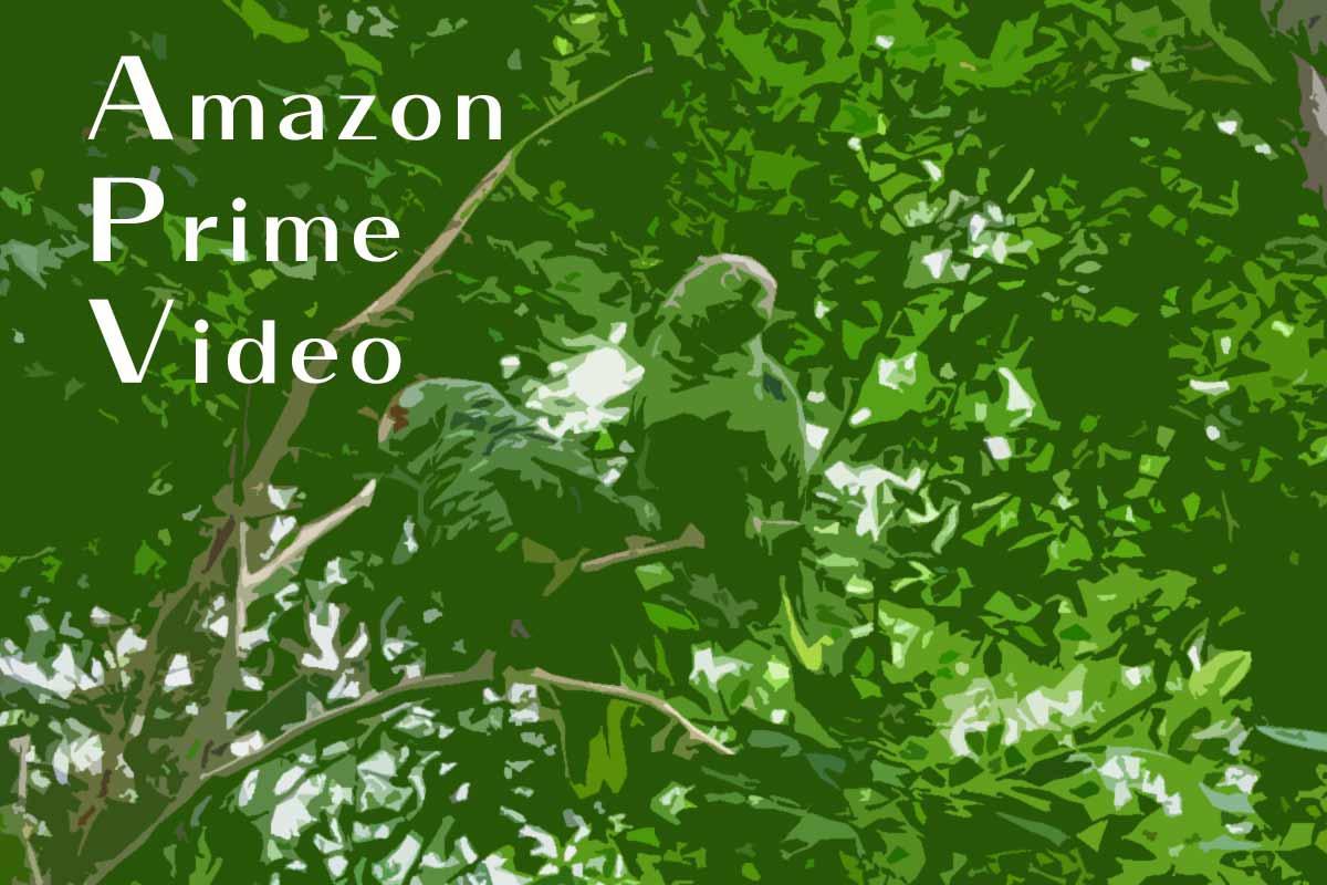 アマゾンプライムビデオの料金の仕組みを徹底解説